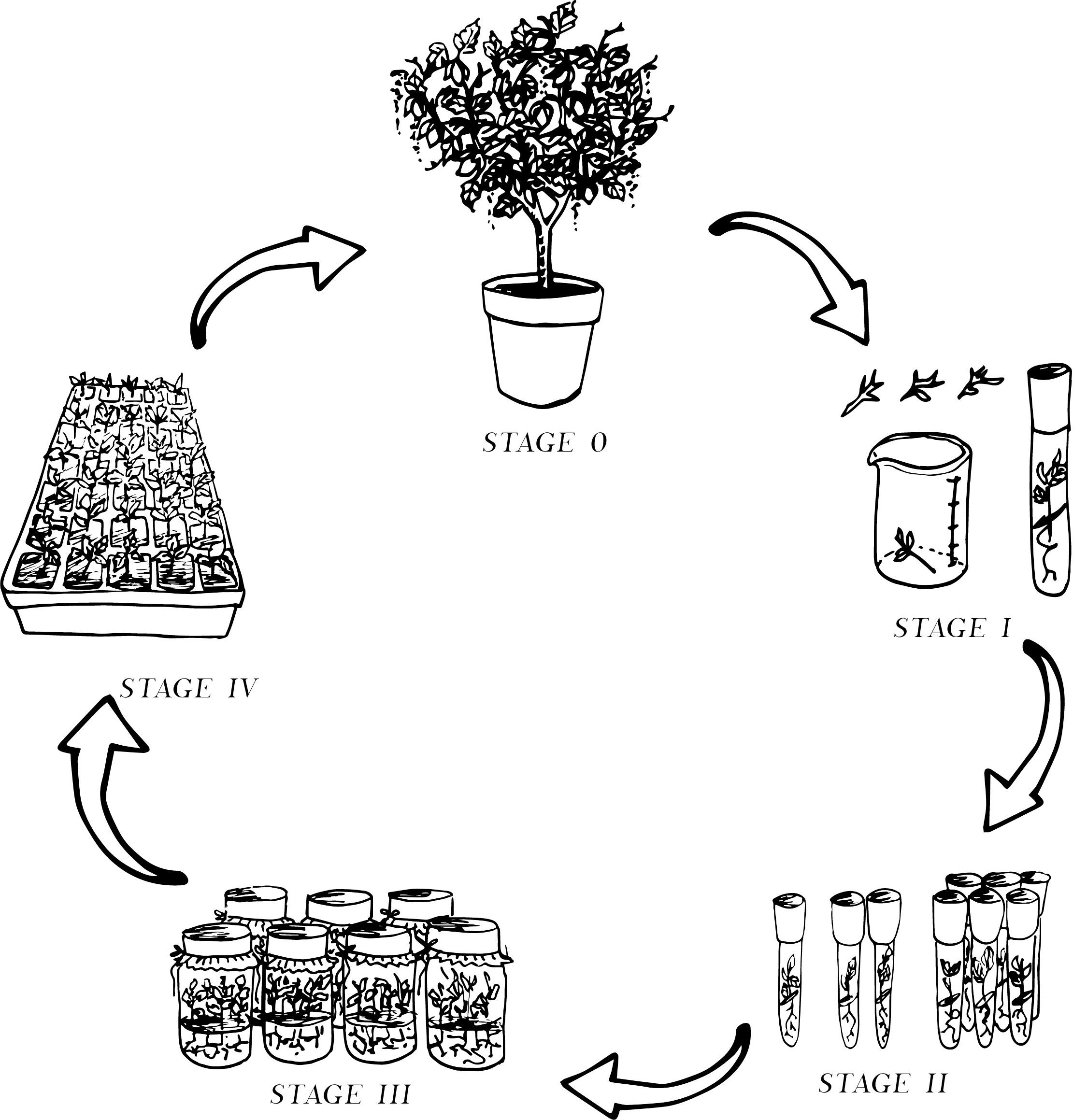 Hudson Plant Tissue Culture Small Plants For A Bigger
